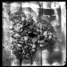 wet-plate-66-A-1-small