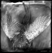 wet-plate-41-small