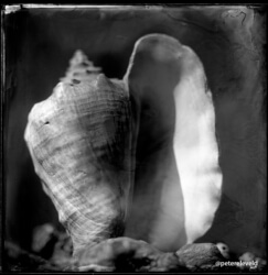 wet-plate-44-001-small