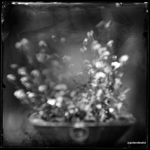 wet-plate-45-003-small