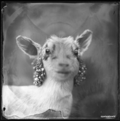 wet-plate-51-B-001-rgb-small