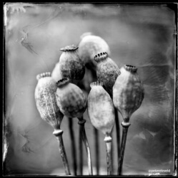 wet-plate-61-002-small