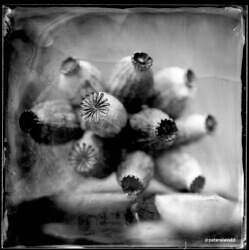 wet-plate-61-003-small