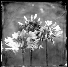wet-plate-62-003-rgb-small