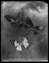 wet-plate-71-001-2-small