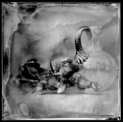 Wet-plate-80-1-RGB-small