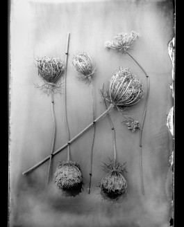 My next exhibition with WetPlate photography, Barcelona