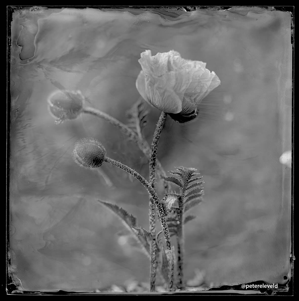 wet-plate-50-001-rgb-small