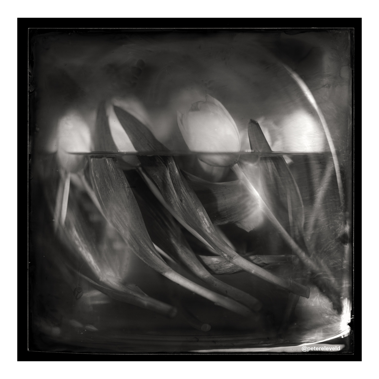 WetPlate Artwork for Sale through, Artsper.com